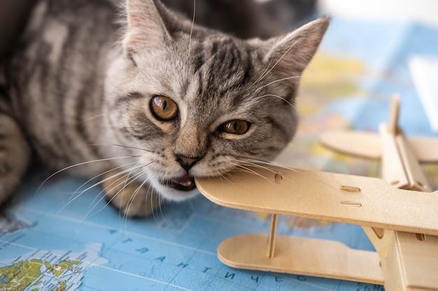 Gato mordiendo un juguete y sentado en un mapa