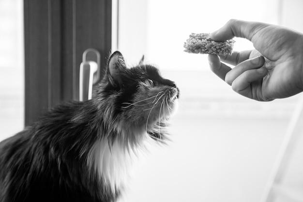 Gato mullido se estira después de la comida