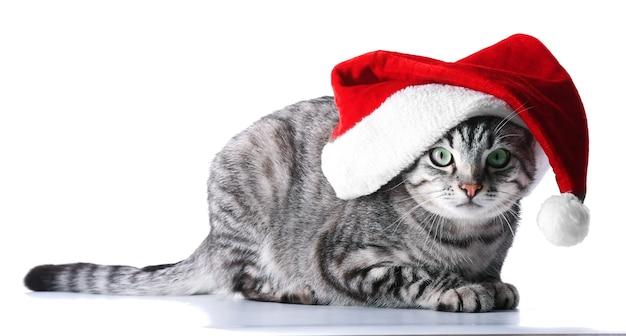 Gato de navidad aislado en blanco