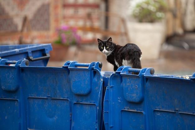 Gato negro callejero sin hogar sentado en la papelera