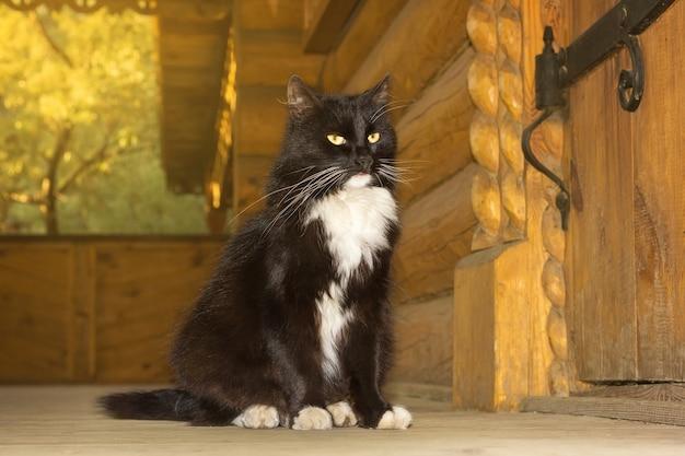 Gato negro de un cuento de hadas.