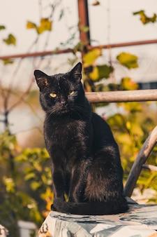 Gato negro con ojos amarillos