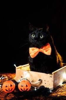 Gato negro con una pajarita naranja sobre una mesa de decoración de halloween