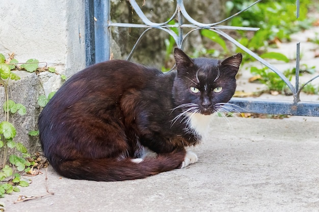 Un gato negro sentado en el patio.