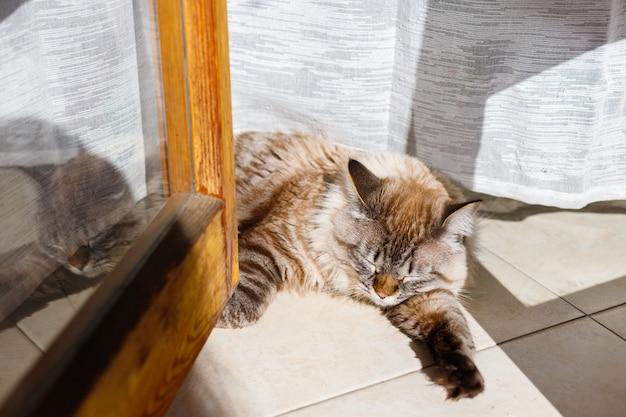 Gato de ojos azules sentado en una ventana soleada