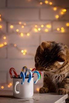 Gato oliendo dulces navideños