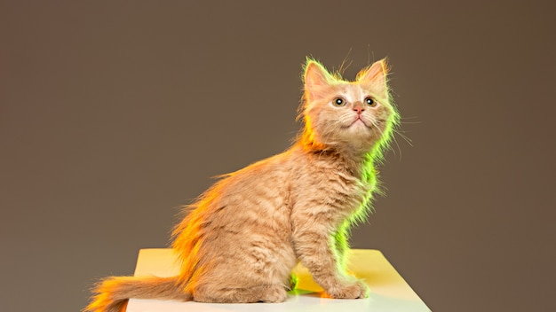 El gato en la pared gris con luces de neón.