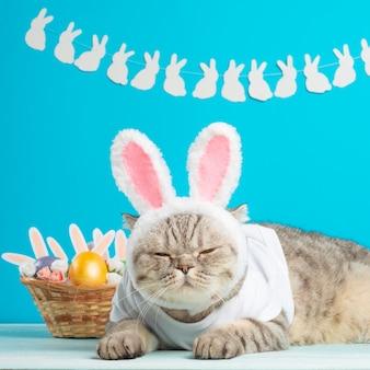 Gato de pascua con orejas de conejo con huevos de pascua. lindo gatito