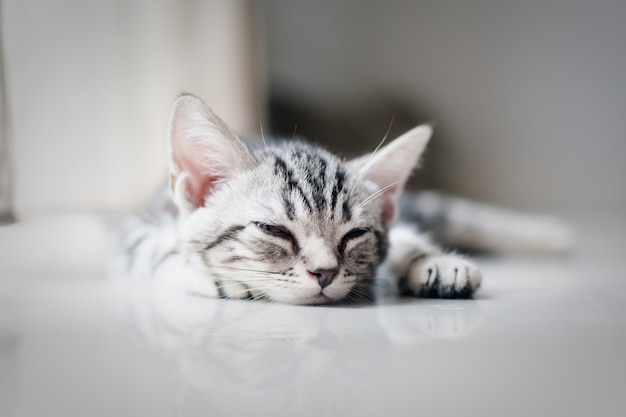 Gato perezoso bebé durmiendo en el suelo
