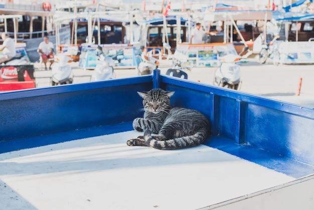 Gato perezoso descansando en un puesto en el mercado