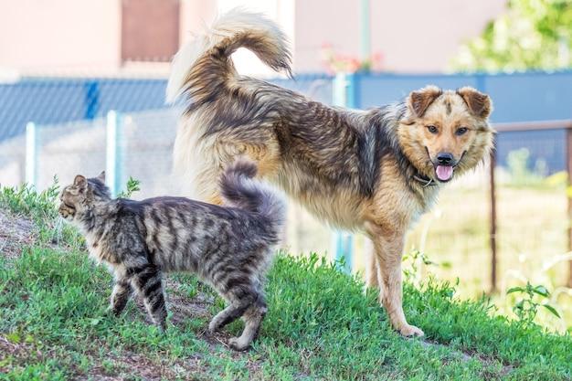 Un gato y un perro se encuentran junto a la hierba verde en el verano. el gato y el perro son amigos