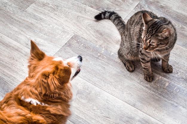 Un gato y un perro están sentados juntos y se miran. fondo gris. perro y gato juntos.