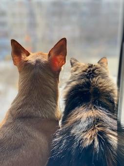 Gato y perro mirando por la ventana, mejores amigos