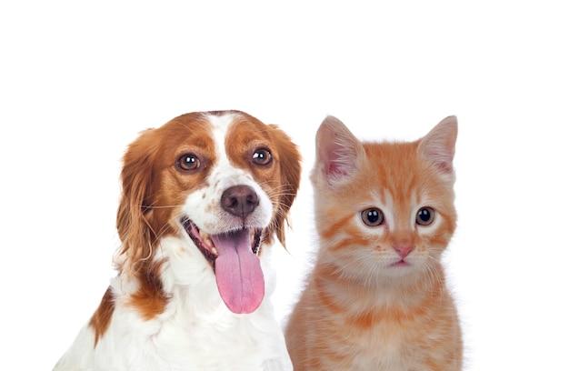 Gato y perro sentado delante y mirando a cámara aislada sobre fondo blanco.