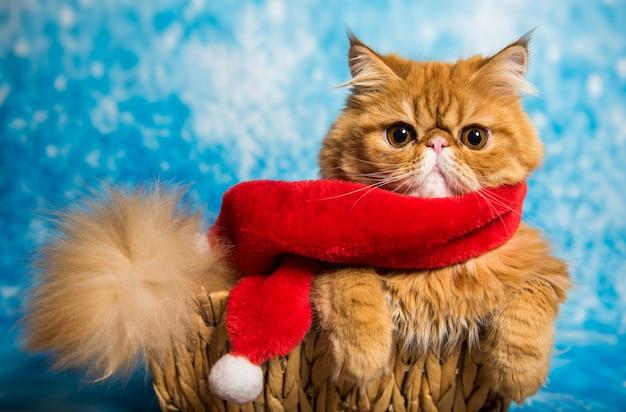 Gato persa rojo en bufanda roja de santa claus sobre un fondo azul de navidad con nieve