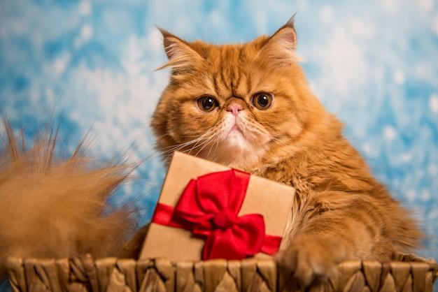 Gato persa rojo con caja de regalo en navidad sobre un fondo azul de navidad con nieve