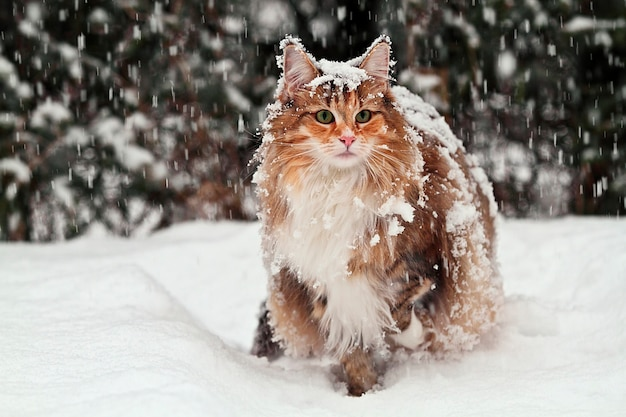 Gato de pie en la nieve