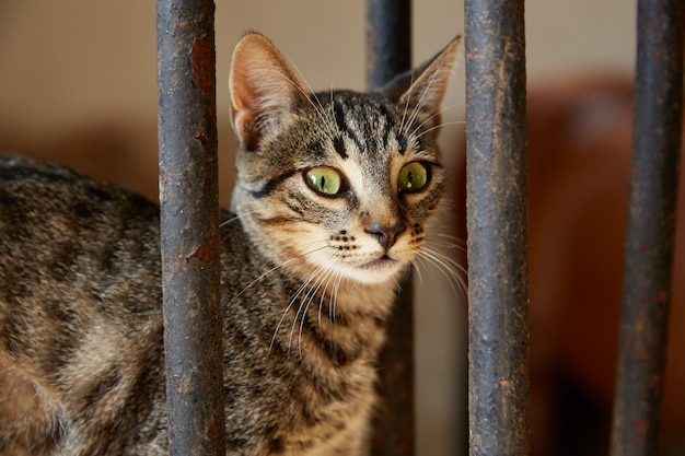 Gato portrain detrás de una valla