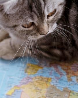 Gato de primer plano sentado en un mapa