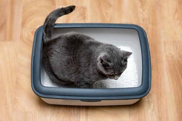 Gato que usa el inodoro, gato en la caja de arena, para defecar u orinar, defecar en el inodoro de arena limpia.