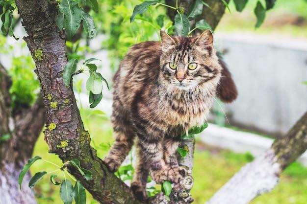 Gato rayado esponjoso en un árbol el gato trepa al árbol