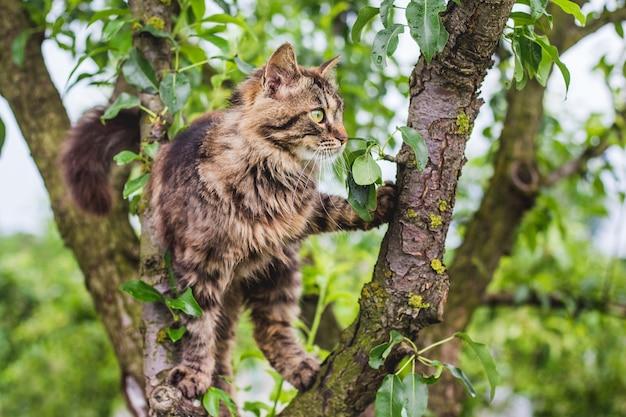 Gato rayado esponjoso en un árbol en medio de una hoja verde