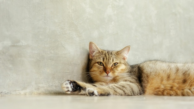 Gato rayado gris que miente en el cuarto.