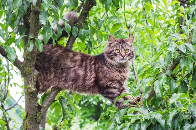 Gato rayado mullido en un árbol en medio de una hoja verde. el gato trepa al arbol