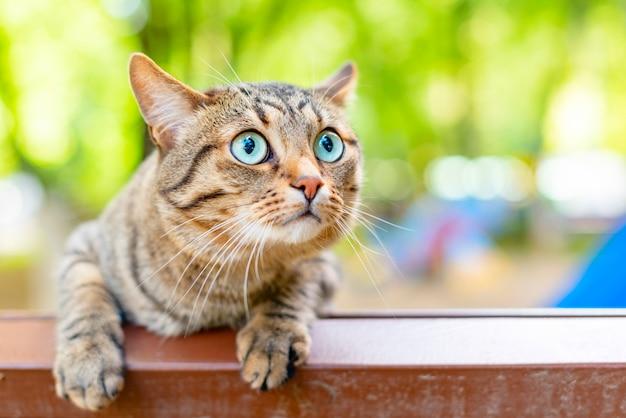 Gato rayado con ojos azules al aire libre
