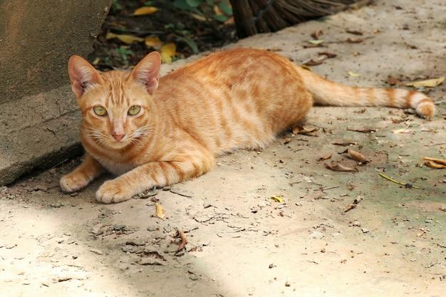 Gato, retrato de gato, gato de belleza lindo