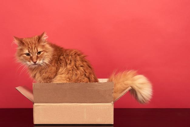 Gato rojo adulto sentado en una caja de cartón marrón sobre un fondo rojo.