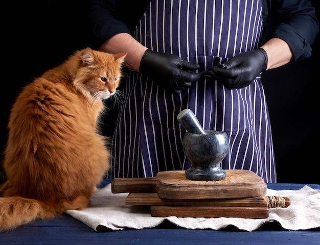 Gato rojo adulto se sienta en una mesa donde un cocinero en uniforme negro prepara la comida
