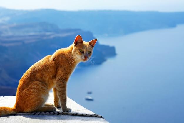 Gato rojo griego, contra hermosa vista al mar de santorini, grecia