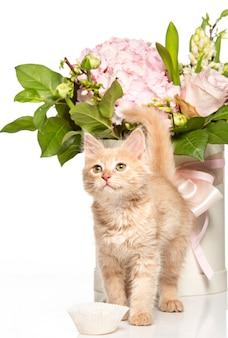 El gato rojo o blanco en estudio blanco con flores.