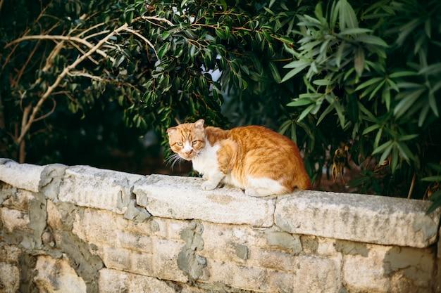 Gato rojo en la pared