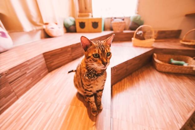 Gato sentado en la cafetería. con luz de ventana.