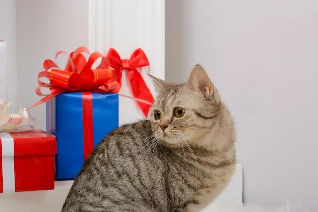 Gato sentado cerca de regalos de navidad