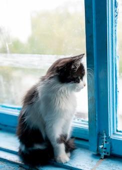El gato está sentado cerca de la ventana.