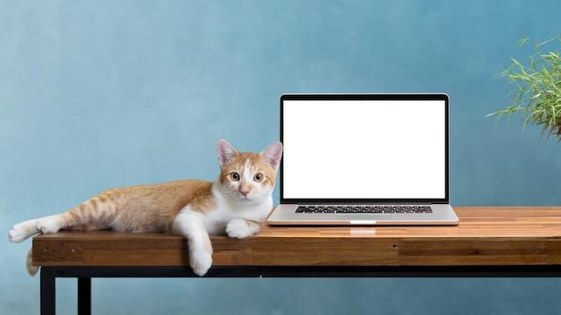 Gato sentado con la computadora portátil en blanco en la mesa de madera aislada en blanco