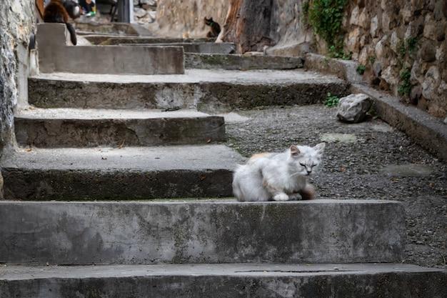 Gato sentado en los escalones de la antigua calle de gurzuf, crimea