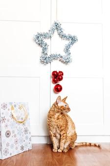 Gato sentado en la habitación, estrella para el año nuevo y navidad, decoración del hogar para las vacaciones, bolsa de regalo