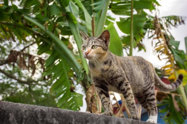 Gato sentado en la pared de ladrillo