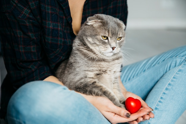 Gato serio sentado en manos de la anfitriona