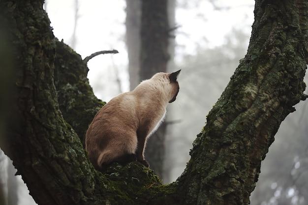 Gato siamés en un árbol del bosque mirando la niebla