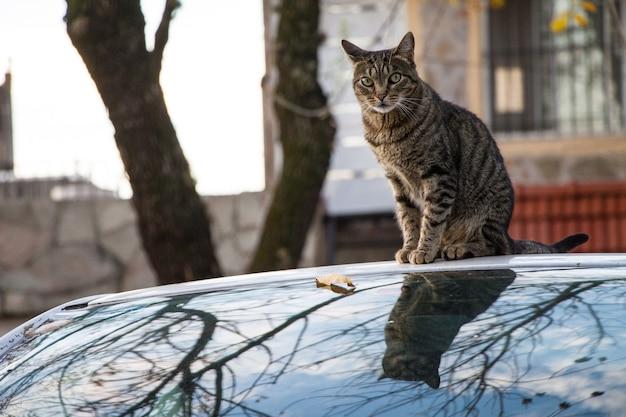 Gato sobre un coche