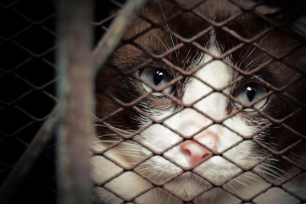 Gato solitario en la jaula de metal.