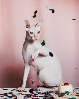 Gato sphynx de cumpleaños con confeti y un pastel sobre fondo rosa claro