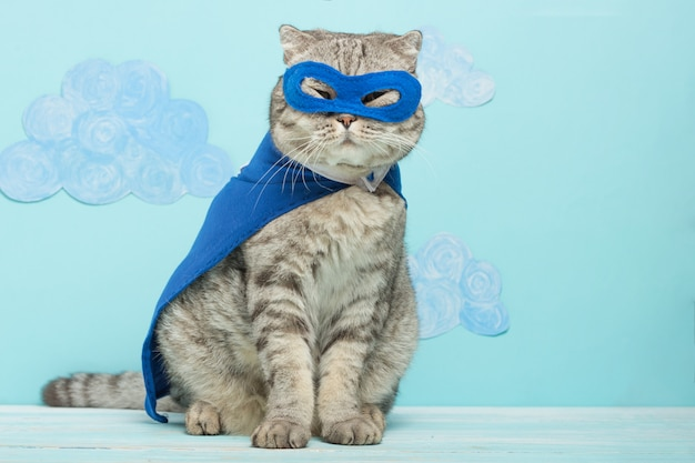 Gato superhéroe, escocés whiskas con manto azul y máscara.