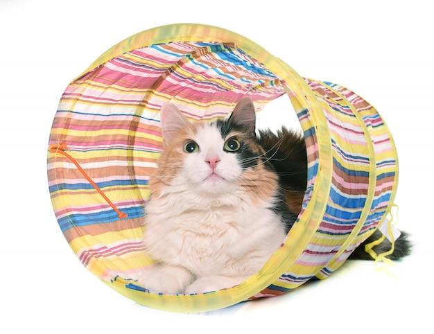 Gato tricolor y tunel