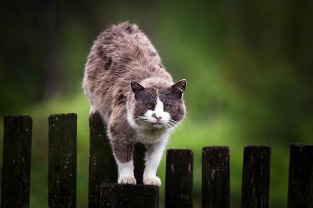 Gato viejo sin hogar gordo en la valla